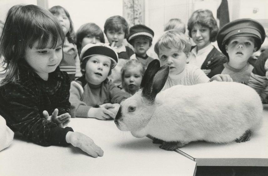 """1984 - Seaton Pre-School Day Centre """"Photographer Alan Peebles had a hard time coaxing Thumper the rabbit to have her photograph taken. Because like most sought after women, Thumper knew the ropes. No payment, no photos and she went into hiding at the back of her cage. But kind words, a little carrot and a crowd of admirers soon brought the stubborn rabbit out to be photographed with her fans at Seaton pre-school day centre. Thumper is the centre's pet, totally spoiled by the youngsters who take care of her. She wanders around the centre nibbling at table legs and jig saws and she is only stopped when she hops up on to the windows to have a chew at the pot plants."""