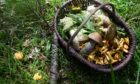 Wild Food Stories will be running the courses in Alford and Aberdeen
