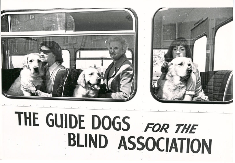 1981: Guide dogs leaving the training centre on the Guide Dogs for the Blind Association.