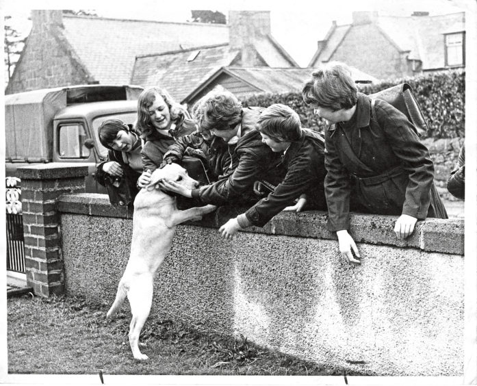 1969: Schoolchildren stop at Ryehill Alford, to pet Petra.
