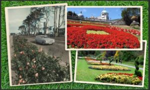 Aberdeen in bloom over the years, left from clockwise, roses on Anderson Drive in the 1970s, Union Terrace Gardens and Seaton Park.