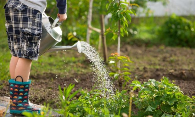 North-east pupils have been taking on a garden design challenge.