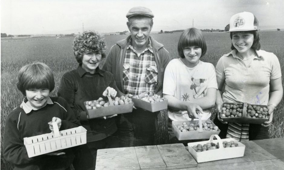 There was no lack of enthusiasm for picking among this cheerful group who were picking fruit at Balmanno, Marykirk, in 1981.