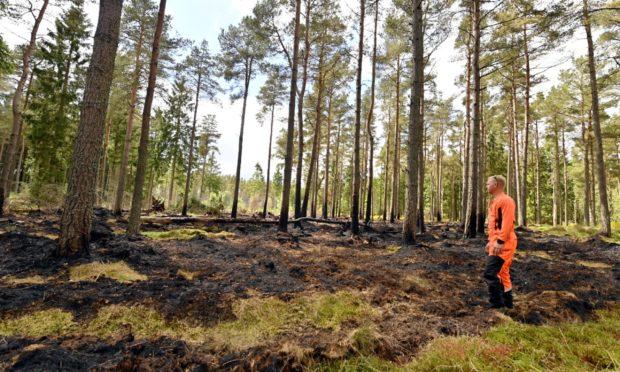 Forestry worker Scott Frazer surveys the damage.