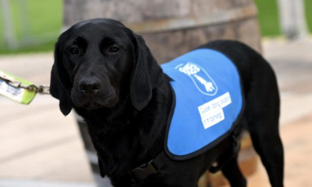 Guide Dogs Scotland has launched a new service to support children with sight loss