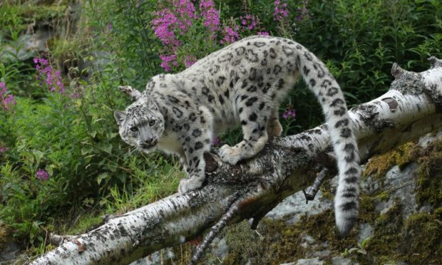 The Royal Zoological Society of Scotland marks World Environment Day by pledging support of the UN Decade on Ecosystem Restoration.