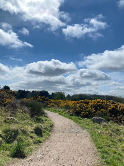 VA May - RediscoverABDN - Stacey Milne - Spring in the hills