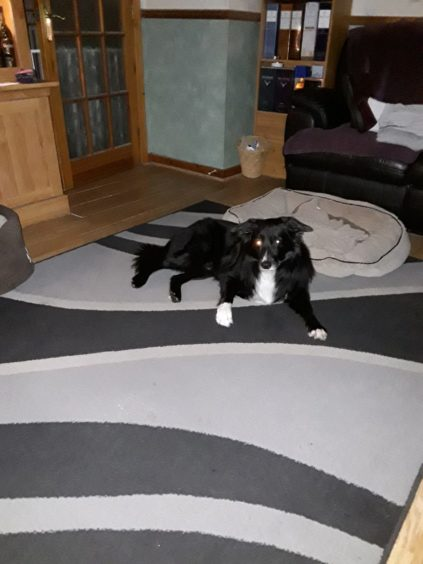 This is Max, the border collie who lives with Sandy in the next picture.