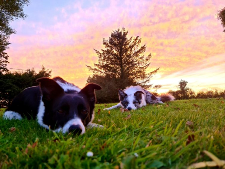 George Milne sent us this beautiful photo of his two collies, Floss, left, and Skye chilling out in the evening sun in his  garden beside Portsoy.