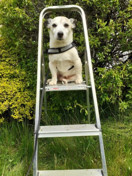 This clever climber is Rufus, who lives in Evanton with Anne, Emma and Stuart Calder.