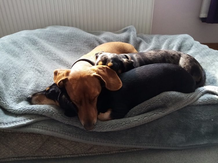 Denzel, Rodney and Gemima get comfortable in this picture from Fi Robertson, of Bucksburn.