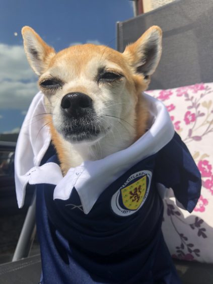 Yes, sir, I can boogie and bark! Little Kiki the Jackchi was certainly supporting Scotland at the Euros, says owner Karen Sinclair, from Ellon.