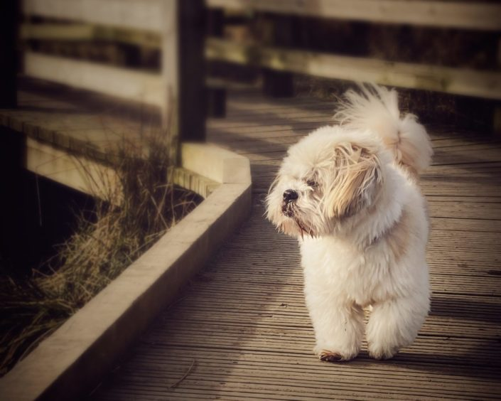This lovely picture of 12-year-old Teddy strutting his stuff on the Bucksburn Valley paths was sent to us by Donna Esson.