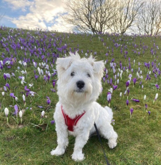 This handsome little fellow is eight-month-old Olly. Thanksto Eve Flett, 11, from Fraserburgh, for sending us the photo.