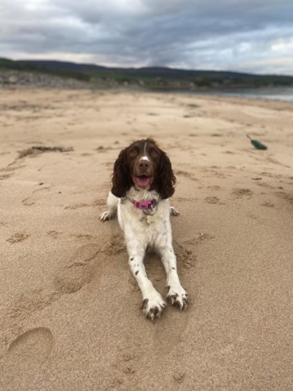 This happy doggie is Bonnie on a walk at Golspie Beach, in a picture from owner Mea Macleod, from Golspie.
