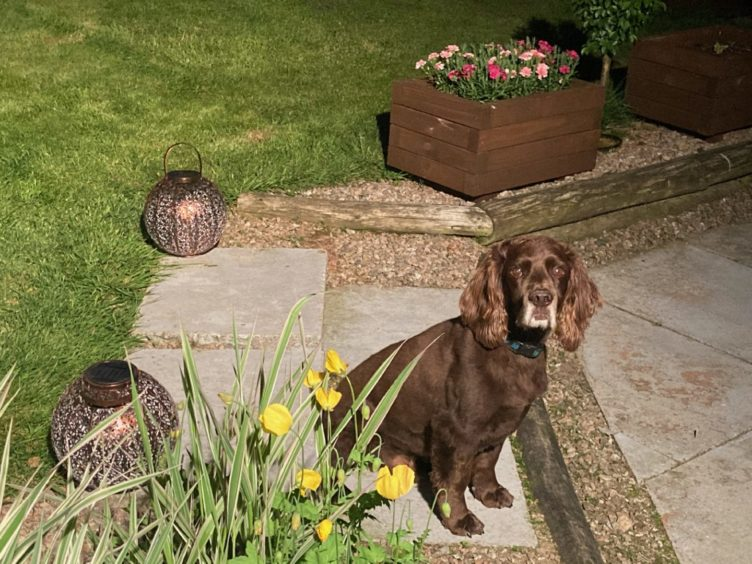 Thanks to Lesley Boxall, from Inverurie, for sending us this photo of her dog Buddy, enjoying the garden.