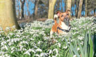 This is Eddie, pictured in the grounds of Hospitalfield House,  Arbroath, back in springtime. He is owned by the Bywater  family, from Arbroath