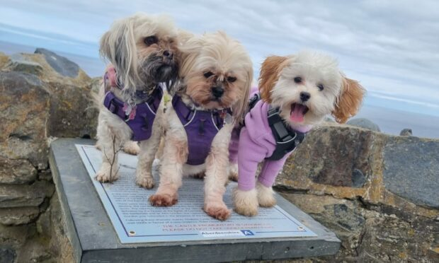 Mia, Tia and Luna pose for a group photo at Findlater Castle. Thanks to Sarah Duncan, from Keith, for sending us the picture.