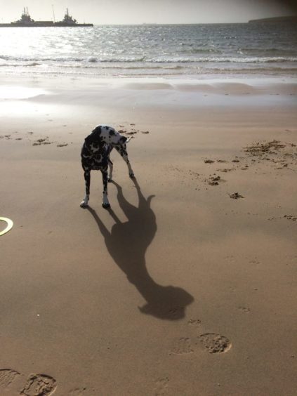 Lisa Venables, from Dounby, sent us this cracking picture of her Dalmatian Daisy on Scapa beach, Orkney.