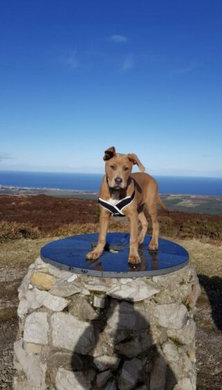 This clever boy is Prince, standing proudly at the top of the Bin Hill, near Buckie. The photo was taken by Prince's owner, Kelly Mckay, from  Portsoy.