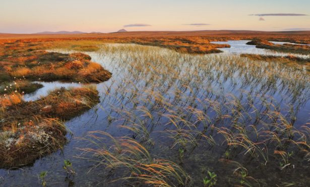 Blanket bog at the The Flow Country in Caithness and Sutherland.