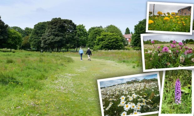 Wildlife and plants encouraged to grow in new green spaces across Aberdeen.