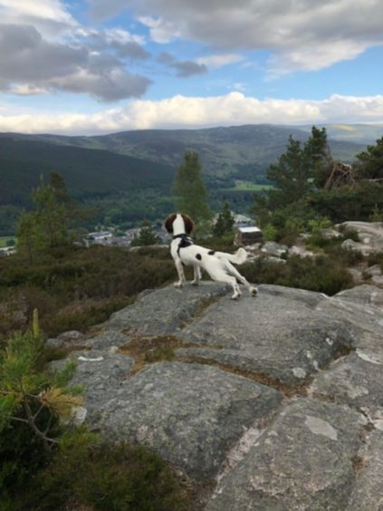 Fiona Bannister sent in this great snap of her dog, Jura, enjoying the view of  Ballater from the top of Craigendarroch Hill