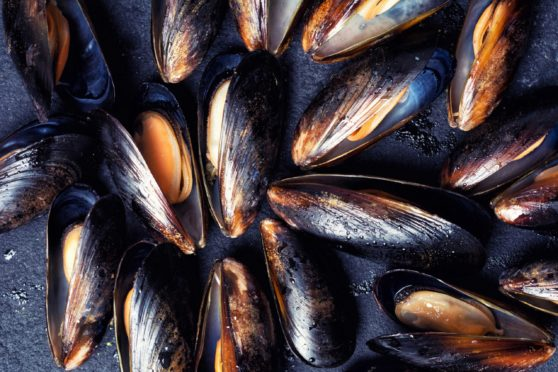 Mussels, oysters, cockles and razor fish are among the affected shellfish.