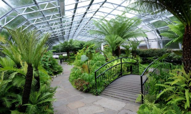 Inside the David Welch Winter Gardens, Duthie Park, Aberdeen.
