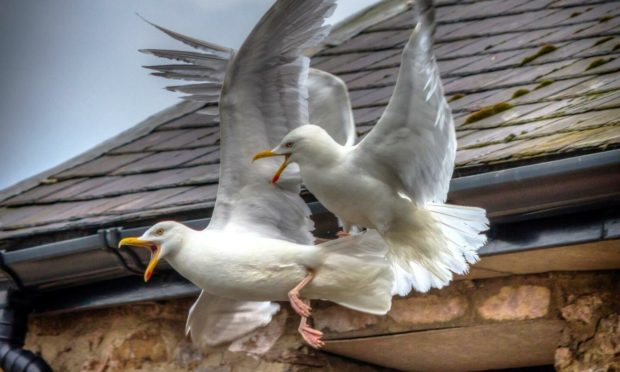 North-east property owners are being urged to call in the professionals to protect the welfare of wild birds in the region.