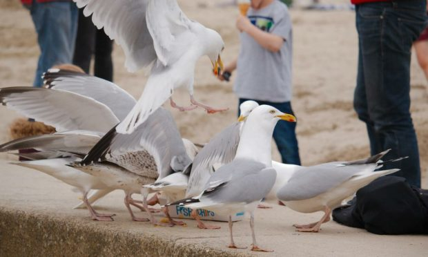 What are gulls good for, other than stealing your chips?