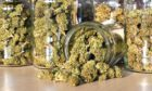Dry and trimmed cannabis buds stored in a glass jars.