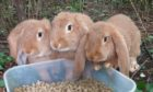Three of the rabbits that were found in Wards, Elgin.