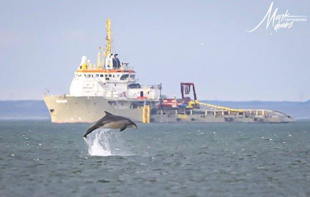 VA Rediscover August - Mark Deans - Dolphin, boats and windfarms