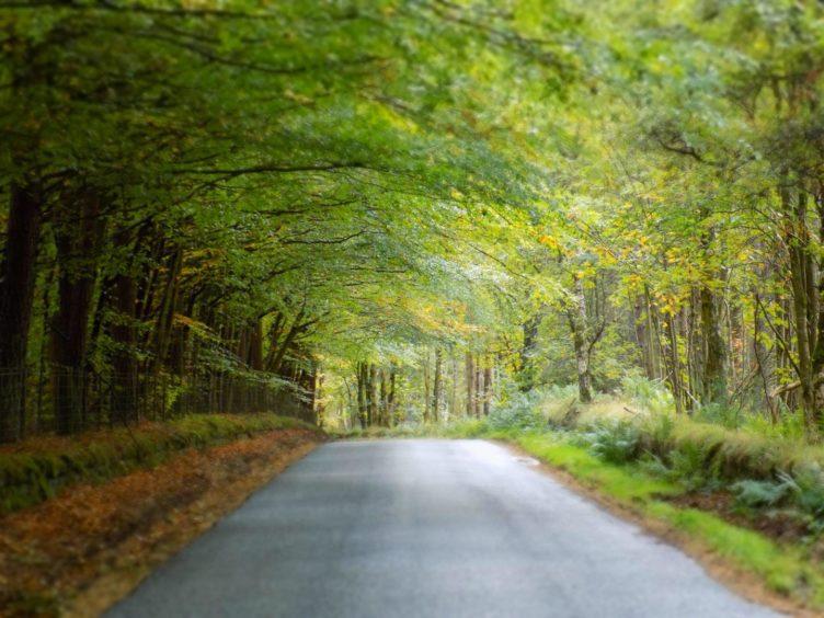 VA Rediscover August - Mark Watt - Glassel Road near Banchory