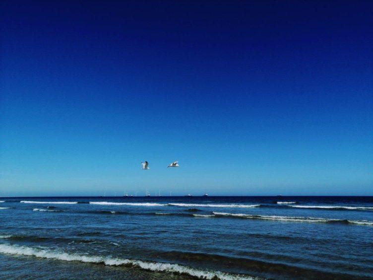 VA Rediscover August - Megan Smith - Birds of the seas