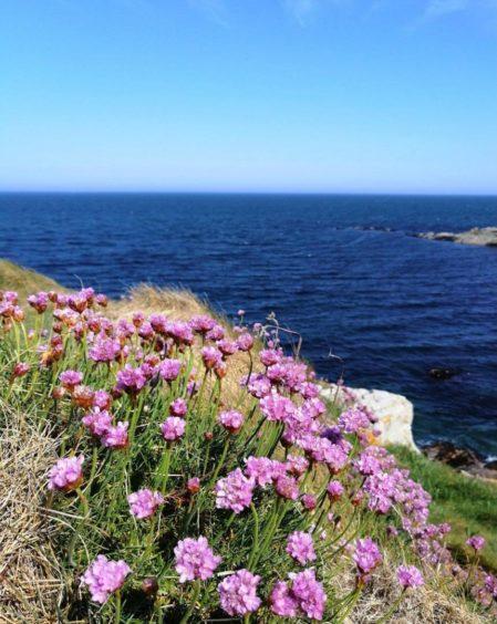 VA Rediscover August - Megan Smith - Coastal flowers at Fraserburgh