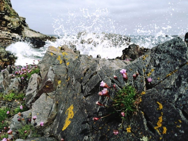 VA Rediscover August - Megan Smith - Mighty splash over the rocks Findochty
