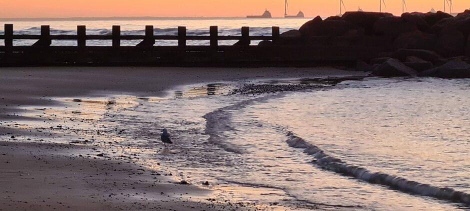 Beach and gull by Andrew Gordon Wilson.