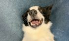 Officers in Aberdeenshire are appealing for the public's help in reuniting a lost dog with its owner.