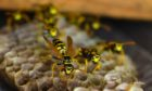 An Aberdeen school was forced to close following a wasp infestation.