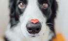 Heart disease test for pets
