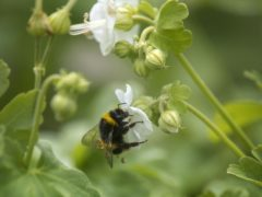 Bees may find that the edge of petals smells different to the centre of the flower (Victoria Jones/PA)