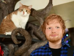 The new Madame Tussauds figure of Ed Sheeran is unveiled at Lady Dinah's Cat Emporium in London (Ian West/PA)