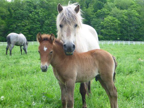 Horses are sensitive to human emotions, a study suggests (Ayaka Takimoto/PA)