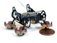 The HAMR robotic cockroach (Yufeng Chen, Neel Doshi, and Benjamin Goldberg/Harvard University)
