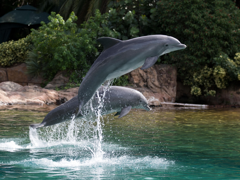 коллекции все фото дельфина илья лагутенко