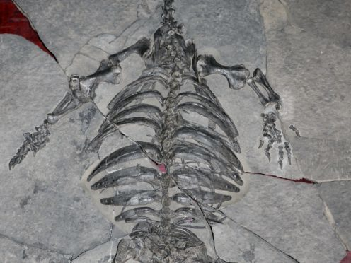 Weird Fossil Turtle With No Shell Sheds Light On The Turtle Evolution
