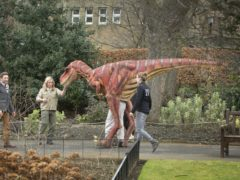 Edinburgh Zoo's animatronic velociraptor as an expert says the dinosaurs were intelligent and probably hunted in packs (Danny Lawson/PA)
