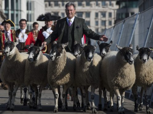 Alan Titchmarsh joins Freemen and Women of the City of London as they take up their historic entitlement to drive their sheep over London Bridge (Victoria Jones/PA)